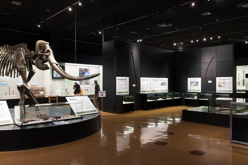 浜松市博物館(原始エリア)
